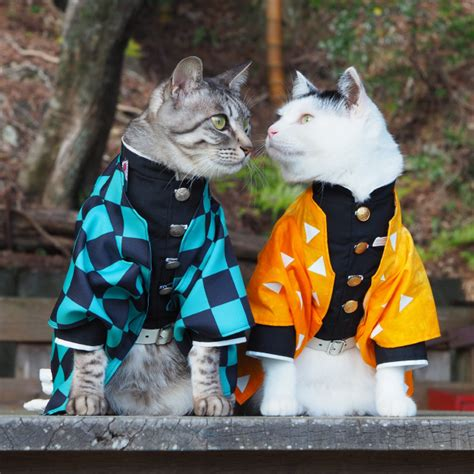 Talented Japanese Man Creates Anime Costumes For His Cats