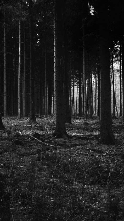 mj53-forest-dark-scary-night-trees-nature - Papers
