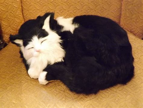 """Realistic Sleeping Cat with Real Fur - 12"""" Black and White"""