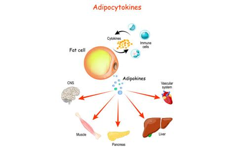 Discover the role of cytokines in the body   Helvetica