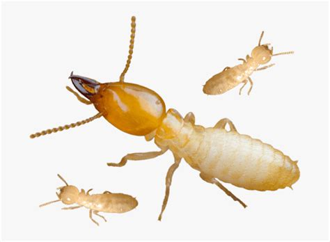 Termite Proof Png - payment proof 2020