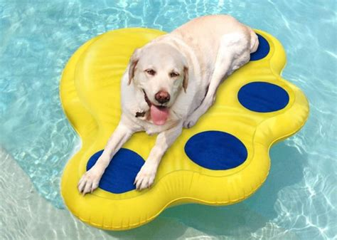 7 Products to Make Pool Time With Your Dog Safe and Fun