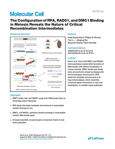 (PDF) The Configuration of RPA, RAD51, and DMC1 Binding in